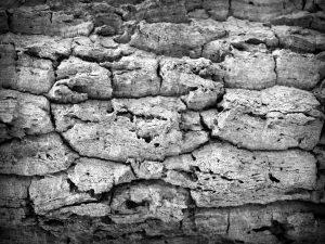 水分の不足が招く肌トラブル